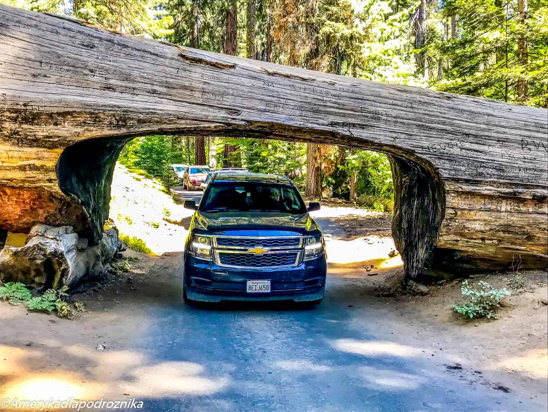Park Narodowy Sekwoi tunnel log sequoia national park
