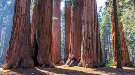 Sequoia National Park – Where Sequoias Grow