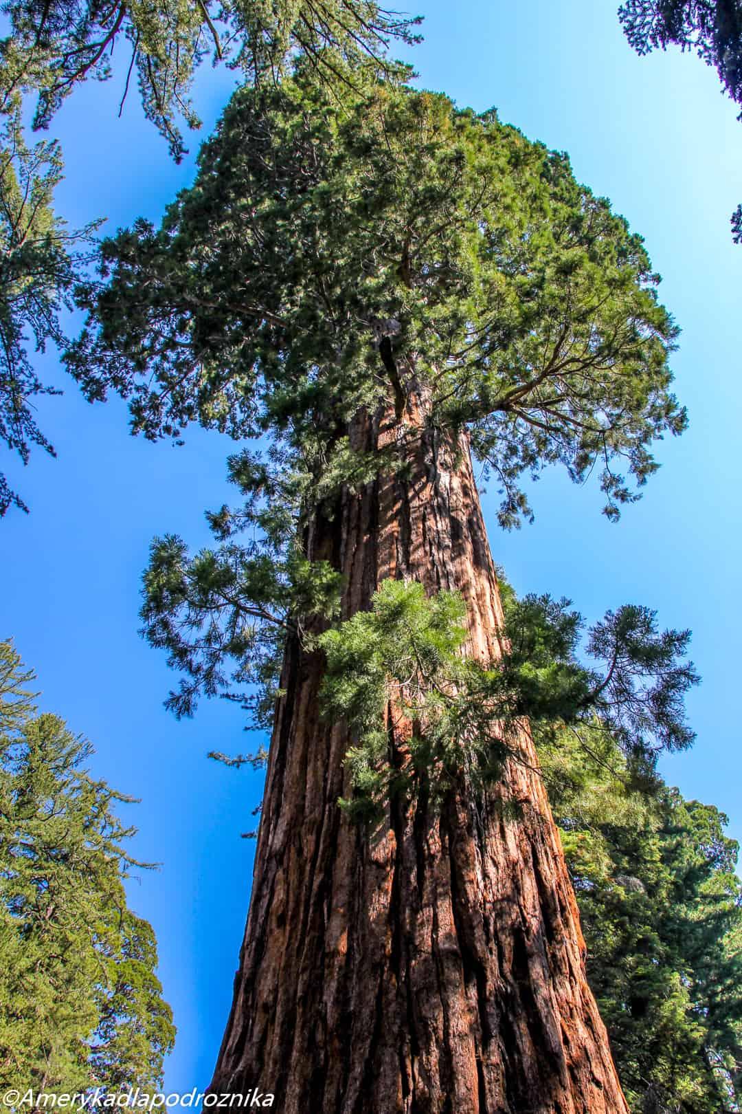 Park Narodowy Sekwoi sequoia national park