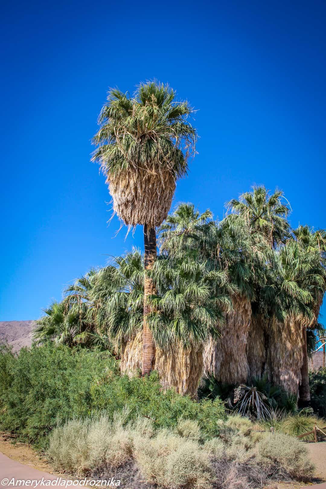 joshua tree oasis of mara