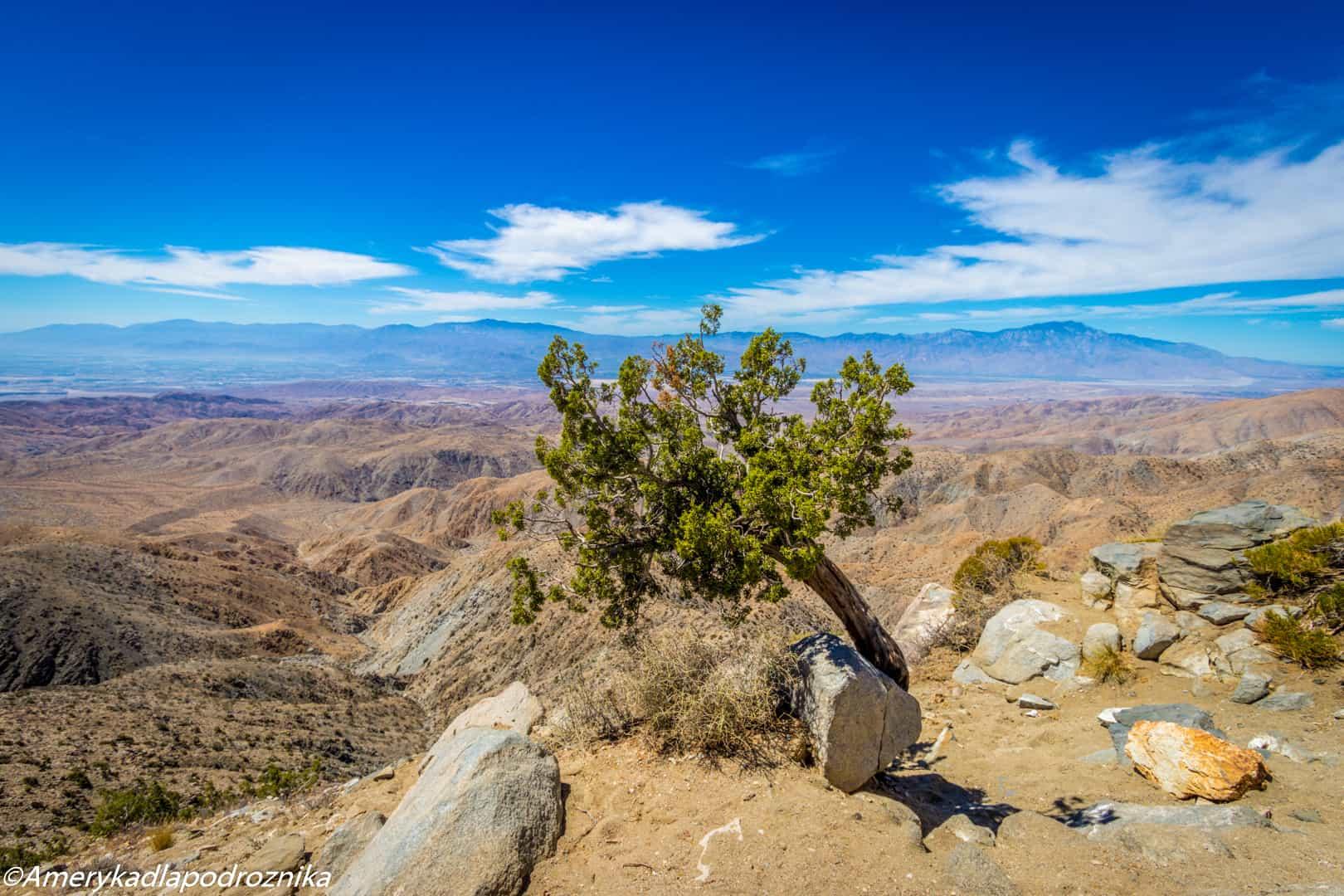joshua tree keys view