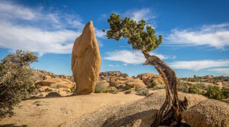 Joshua Tree – spotkanie z prawdziwą pustynią