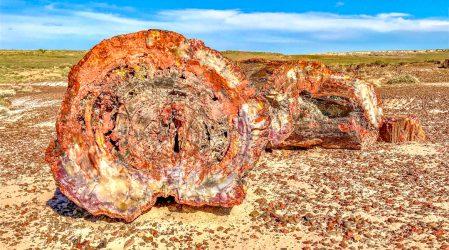 Petrified Forest – skamieniały las w Arizonie