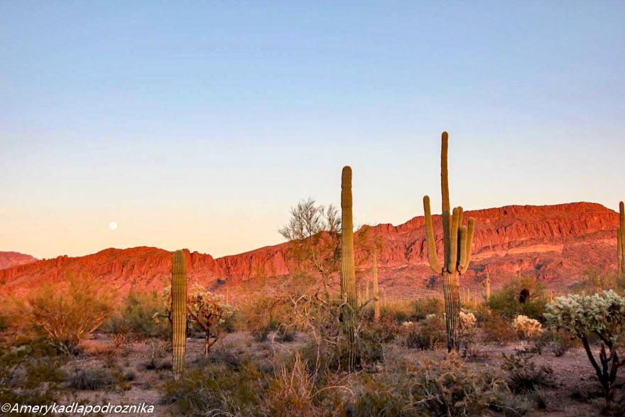 park saguaro