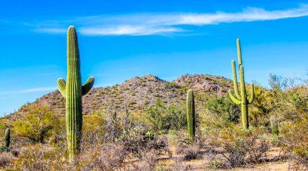 Park Saguaro – kraina największych kaktusów w USA